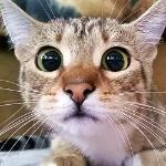 KittyMaster
